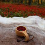 cueillette Laponie